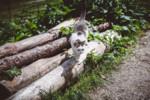 Neugierige Katze auf der Alm